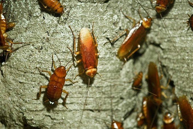 cockroaches on a tree